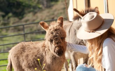Hidden Canyon Ranch + Farms Farm Tours Starting this Spring