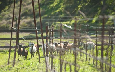 Behind the Scenes:  Meet the Animals of Hidden Canyon Ranch & Farms